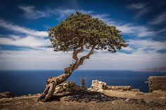 Tree Picture of a tree. Monolithos. Rhodes.  This is another of my favourite images of 2016 taken at the site of the church and abandoned castle in Monolithos. Perched on the cliffs above the sea with spectacular views all around. And I photograph the tree! #canon6d #canon #canonphotographer #canonphotography #canonphotos #rickmcevoyphotography #rickmcevoy #architecturalphotography #architecturalphotographer #architecturephotography #architecturephotographer  #constructionphotographer…