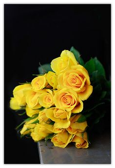yellow roses. black background.