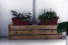 #plants #pallets #wood #white #vsco #vscocam #inspiration #home