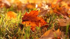 beautiful leaves grass autumn hd wallpapers download