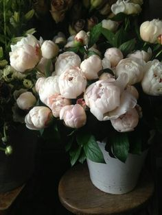 ♛BOUTIQUE CHIC♛ Floral Photography, Still Life Photography, Expensive Wine, Wild Flowers, Peonies, Bouquet, Vegetables, Plants, Equinox