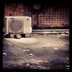 猫、頭隠して尻隠さず。…今日寒いもんねぇ。 - @blaue_fuchs- #webstagram