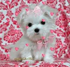 Kisses to you. Cute Good Night, Night Gif, Jesus Art, Cute Teddy Bears, Cute Dogs And Puppies, Disney Wallpaper, All Things Christmas, Daffodils, Happy Day
