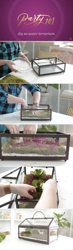 Spring is almost here and if you worry about your (lack of) green thumb, have no fear! Check out how we are adding a touch of the outdoors to our living rooms with this DIY No Water Terrarium. This trendy and easy do-it-yourself project uses moss and succulents.