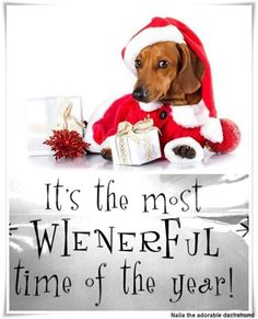 HAPPY HOLIDAYS TO ALL YOU WIENERS... #dachshund