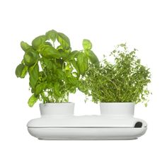 The DUO - for your herbes in the citchen. Designed in Sweden. $35