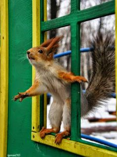 Funny cute animals pictures mom 59 Ideas for 2019 Cute Baby Animals, Animals And Pets, Funny Animals, Squirrel Pictures, Cute Animal Pictures, Beautiful Creatures, Animals Beautiful, Cute Squirrel, Squirrels