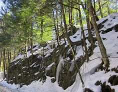 These tough evergreen trees are growing in and among the icy rocks on this New Hampshire roadside in New England during the month of March in late Winter.