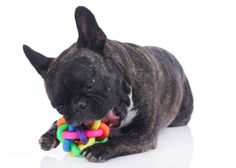 (PET CARE/DOGS) Let's face it, dogs get bored. Thankfully there are plenty of options for dog toys on the market, but how can you choose a toy that will last for more than an afternoon? The H…