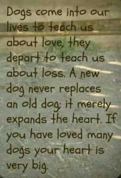 Loved Many Dogs