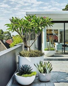 This rooftop terrace features a low-maintenance garden. Modern planting and sharp lines give this rooftop terrace and garden a contemporary appeal. Modern Planting, Modern Landscaping, Front Yard Landscaping, Landscaping Ideas, Landscaping Shrubs, Rooftop Terrace, Terrace Garden, Garden Pots, Terrace Decor