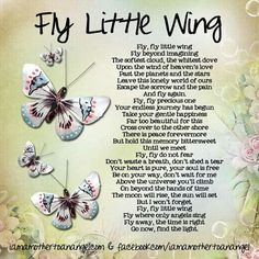 Fly little wing