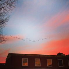 The bitter cold of the red evening sky was distracted by airborne calls: I looked up to see this magnificent V formation of geese flying into the night. Their elegance was wonderful. Nature is so humbling.#geese #flying #migrating #birds #formation #v #flight #sunset #dusk #night #evening #cold #winter #december #building #shape #architecture #birds #nature #wild  #flight #wonderful #clouds
