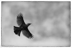 tui flying - Google Search