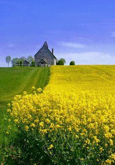 bloemenweide in geel en groen