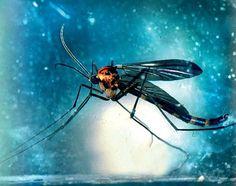 Cinco insectos con luz propia