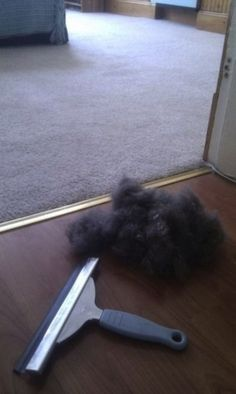 Use a rubber squeegee to remove pet hair from carpet. May have to give this a try on the furniture too.