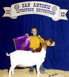 Powell-Holman Grand Champion Percentage Boer Goat Doe. Show Goats for sale.
