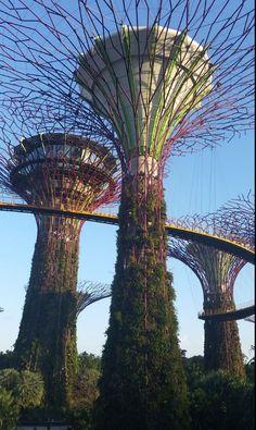 #marinabay #marinabaysand #singapore #gardens