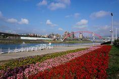 成美河濱公園花(花期至12月下旬)