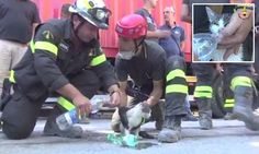 Kitten found by firefighters after being buried in earthquake rubble