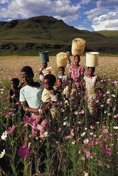 Zulu Children in a field of Cosmos flowers, Natal Midlands, South Africa. BelAfrique - Your Personal Travel Planner - www.belafrique.com