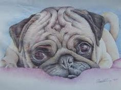 drawing i done of a pug puppy in coloured biro / ballpoint pens. wish i had done this on better quality paper :/ pug drawing in colour biro Cute Drawings, Animal Drawings, Ink Drawings, Mops Tattoo, Animals And Pets, Cute Animals, Biro Drawing, Pug Tattoo, Pug Art