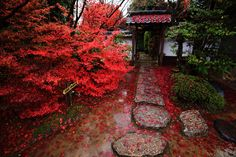 colored leaves Konpuku-ji Temple in Kyoto,Japan
