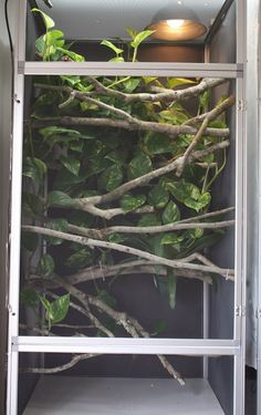 How To Set Up A Proper Chameleon Enclosure | Much Ado About Chameleons