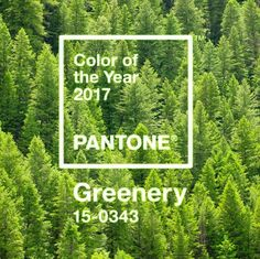 Yes! #Greenery Pantone Color of 2017! We are a fan.  Photographer : Les Dave Jacobs