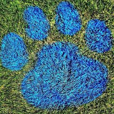 It's not Blue's Clues--it's Bulldog Nation! Photo by Jack Hellie, Drake Photo Bureau #DrakePOTD