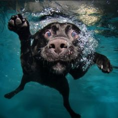 Underwater Dogs: photographs of dogs underwater by Seth Casteel