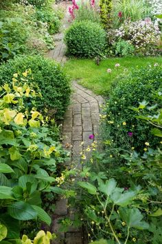 How to choose planting schemes for small gardens - brilliant borders that really work! Small Garden Borders, Narrow Garden, Big Garden, Small Garden Design, Plants For Small Gardens, Big Plants, Cool Plants, Small Garden Inspiration, Small Gardens