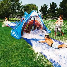 shark water slide!