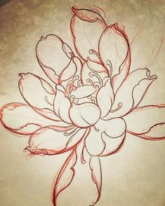 No photo description available. Japanese Lotus, Japanese Flower Tattoo, Japanese Flowers, Tattoo Drawings, Body Art Tattoos, Bonsai Tree Tattoos, Japan Flower, Asian Flowers, Japanese Drawings