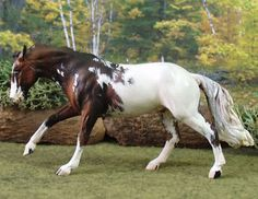 Blanket Appaloosa Horses   Appaloosa Horse Page 32 Images - I really like this coat, it's different/striking.