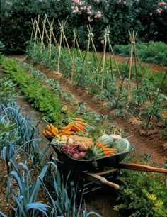 Vegetable Bed, Backyard Vegetable Gardens, Potager Garden, Veg Garden, Vegetable Garden Design, Garden Cottage, Edible Garden, Garden Landscaping, Garden Planters