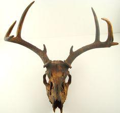 painted deer skulls   Rusty Real Deer Skull Antlers Art Sculpture by MayaJadeCreations