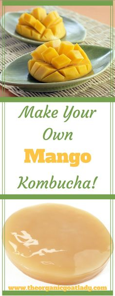 Do you make your own Kombucha? Are you always on the look out for delicious new Kombucha flavors? This Mango Kombucha Recipe is going to be your new favorite! Diy Kombucha, Make Your Own Kombucha, Kombucha Flavors, Probiotic Drinks, Best Probiotic, Kombucha Benefits, Making Kombucha, Kombucha Brewing, Fresco
