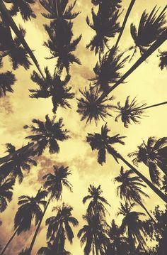 Palm Tree Living