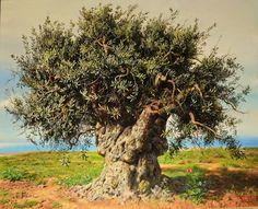 ELIDON * Albania ~ Greece * Olive Tree