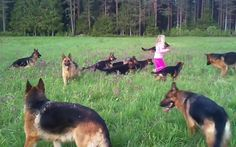 This takes place at an open ground with trees and tall grass in Norway. 14 German Shepherds and a 5-year-old girl, Pernille, the leader of the pack, are having a fun-filled afternoon there. They are running and chasing each other. When the little girl grabs something from the grass, she throws it up the air, …