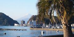 The Izu Peninsula (Izu Hanto) is a resort area about 100 kilometers southwest of Tokyo, popular for its hot springs, beautiful coastlines, b...
