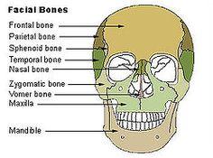 Facial Bone Radiography - wikiRadiography, Facial Bone | cranio ...