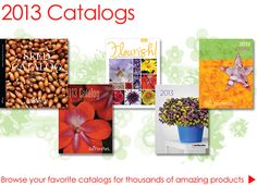 Link to all the catalogs from Ball Horticultural Company. Plant Catalogs, My Secret Garden, Your Favorite, Outdoor Gardens, Outdoor Living, Gift Wrapping, Gardening, Link, Amazing