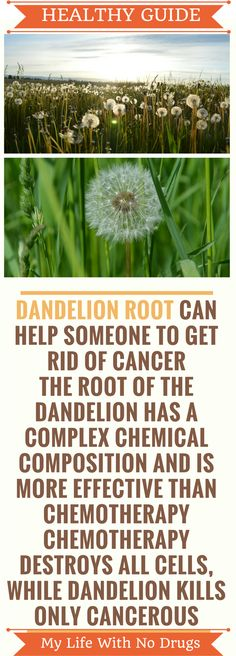 #Dandelion root tea against #prostatecancer, #leukemia and other types of #cancer