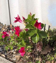 Outdoor Garden Bench, Outdoor Gardens, Wagon Wheel Decor, Garden Care, Green Life, Calendula, Garden Projects, Garden Plants, Bonsai