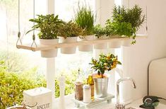 Whether in the kitchen or on the terrace: A herbal shelf looks good everywhere … - Easy Diy Garden Projects Amazing Gardens, Beautiful Gardens, Decor Interior Design, Interior Decorating, Backyard Fences, Diy Garden Decor, Build Your Own, Kraut, Better Homes