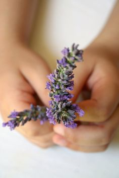 Lavender ✿⊱╮love it...grow it...pick it...dry it...place it around our home...in vacuum cleaner...in little cloth sachets ...love it!