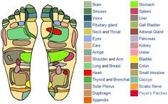 Reflexology foot chart showing pressure points - Printable reflexology foot chart showing the natural body healing zones, or pressure areas, on the soles of the feet. Acupressure Points Chart, Reflexology Points, Foot Reflexology, Acupuncture Points, Outline, Foot Chart, Hand Massage, Lymph Massage, Acupressure Massage